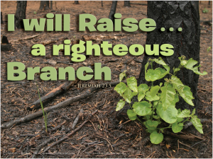 RIGHTEOUS BRANCH